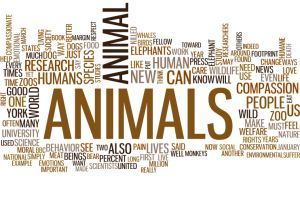 The Animal Manifesto: Six Reasons for Expanding Our Compassion Footprint by Marc Bekoff